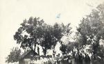 Ballagas_1952.jpg